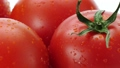トマト 33359007