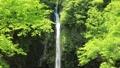 5月 緑の阿弥陀ヶ滝ー日本の滝百選ー 33382422