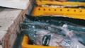 fish,food,seafood 33406326