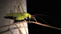 grasshopper, bug, insect 33459411