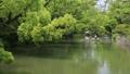 5月 緑の柳川川下り 33471819