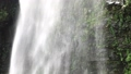 5月 緑の阿弥陀ヶ滝 33471886