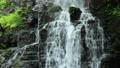 5月 緑の龍双ヶ滝 -日本の滝百選- 33471887