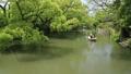 5月 緑の柳川川下り 33471911
