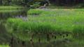 5月 湖北の平池(ひらいけ) -カキツバタの群生地- 33471913