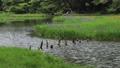 5月 湖北の平池(ひらいけ) -カキツバタの群生地- 33471915