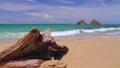 美しい 海 ビーチ 夫婦岩 エメラルドグリーン 33514855