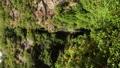 次の滝(5) 33521144