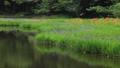 5月 湖北の平池(ひらいけ) -カキツバタの群生地- 33586025
