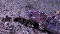 sea, underwater, fish 33632511