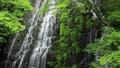 5月 緑の龍双ヶ滝 -日本の滝百選- 33666726