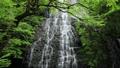 5月 緑の龍双ヶ滝 -日本の滝百選- 33666727