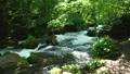 奥入瀬渓流 渓谷 渓流の動画 33697826