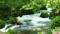 奥入瀬渓流の阿修羅の流れ 33706125