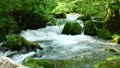 奥入瀬渓流の阿修羅の流れ 33706126