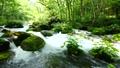 奥入瀬渓流の石ヶ戸の背 33706129