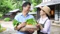 农业中间夫妇菜农夫图象 33891854