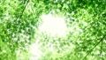 树叶 叶子 翠绿 34221066
