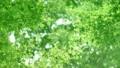 树叶 叶子 翠绿 34221067