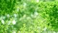 树叶 叶子 翠绿 34221068