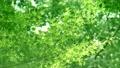 树叶 叶子 翠绿 34221069