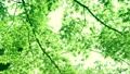树叶 叶子 翠绿 34221070