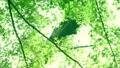 树叶 叶子 翠绿 34221071