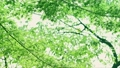 树叶 叶子 翠绿 34221072