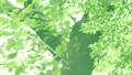 树叶 叶子 翠绿 34221073