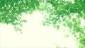 树叶 叶子 翠绿 34221074