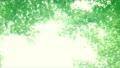 树叶 叶子 翠绿 34221075