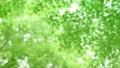 树叶 叶子 翠绿 34221076