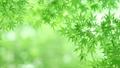 树叶 叶子 翠绿 34221079