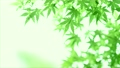 树叶 叶子 翠绿 34221080