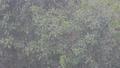 雨と樹木  34305372