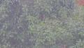 雨と樹木  34305374