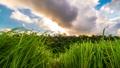 タイムラプス 植物 草の動画 34320531