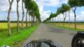 はさ木の並木道をサイドカーで走行した動画 34401966