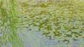 ビオトープと風に揺れる柳の木  34549025