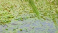 ビオトープと風に揺れる柳の木  34549026