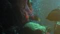 动物 鱼 银莲花 34588333