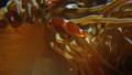 动物 鱼 银莲花 34588370