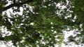 クルクルと早く回る森林 34726659