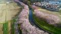 空撮 見沼田んぼの日本一の桜回廊 34731026