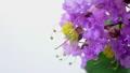 開花 タイムラプス 花の動画 34759201