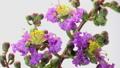 bloom, blooming, flowering 34759204