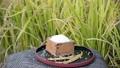 paddy, rice, polished 34759536