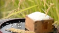paddy, rice, polished 34759539