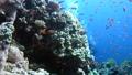 fish, coral, animal 34787319