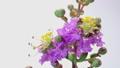 開花 タイムラプス 花の動画 34876945